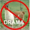 Drama Lllama