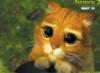 Elena: Кот из Шрека