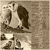 gypsy_owl userpic