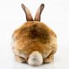 bunny-butt