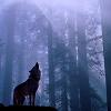 Wolf  - Moonlit Forrest