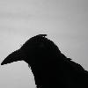 """Nevermore"" [userpic]"