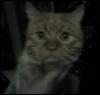 Мутный кот