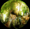 lizuh userpic
