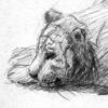 рисунок, тигр