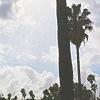 Los Angeles: The Beach