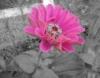 snoglobel userpic