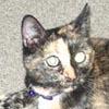 kittieandcirrus userpic