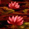 etherealgrace userpic