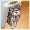 mollypuppy userpic