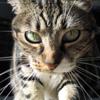 slashed_crimson userpic