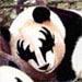 Nowhere Man: panda