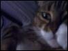 maried2alamp userpic