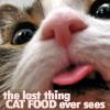 cats - cat food POV