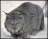 mnemoscat userpic