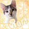 pets - rory - peach