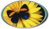 butterflyvine