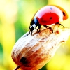 lady bug- graphics by kejsarinna