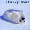 Seal Perspective