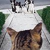 девушка с историей: кот и собаки