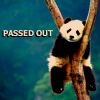 passed out panda