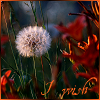 Havoc: dandelion wish