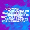 HP - growing marijuana herbology