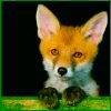 Actual-Fox