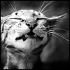 cat_ksu userpic
