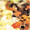 blindwolf userpic