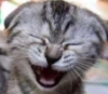 Carol Bartholomew: Laughing? cat