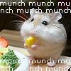Hamster Munchmunchmunch