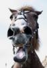 Ди: Лошадка