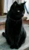 lavenderkat userpic
