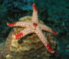 lynicole userpic