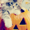 kitteninpumpkin