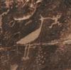 petrogliph