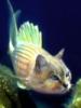 рыбокот