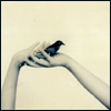 sparrow_aire userpic