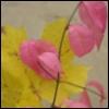 n1 userpic