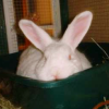 candy_rabbit userpic