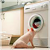 Свинка чистюля