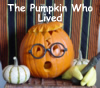 The Elephant in the Room: Pumpkin