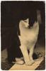 stultifera navis: yamamoto cat