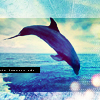 Cecilie: Stock - Dolphin