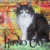 hipnocat snúlli