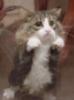 Несчастный кот