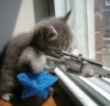 go kitty go kill kill kill