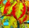 Abbie Strehlow: Fall Leaves