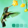 Animels - Hummingbird